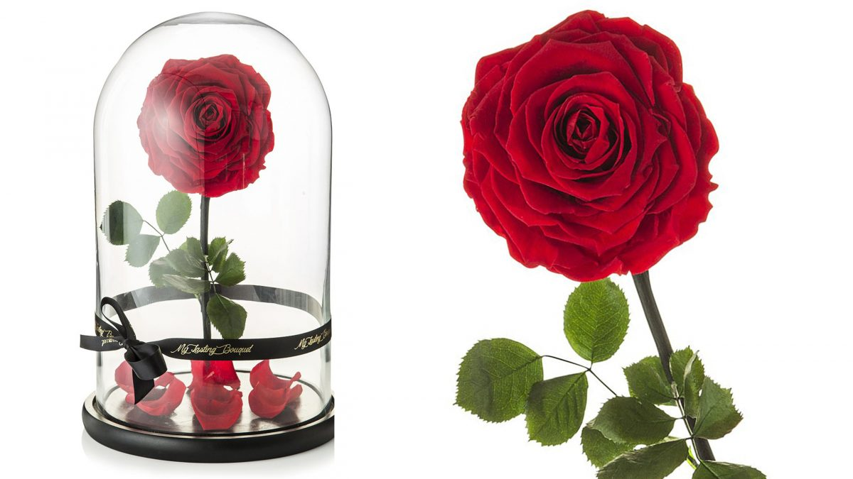 Beauty and the beast rose for sale